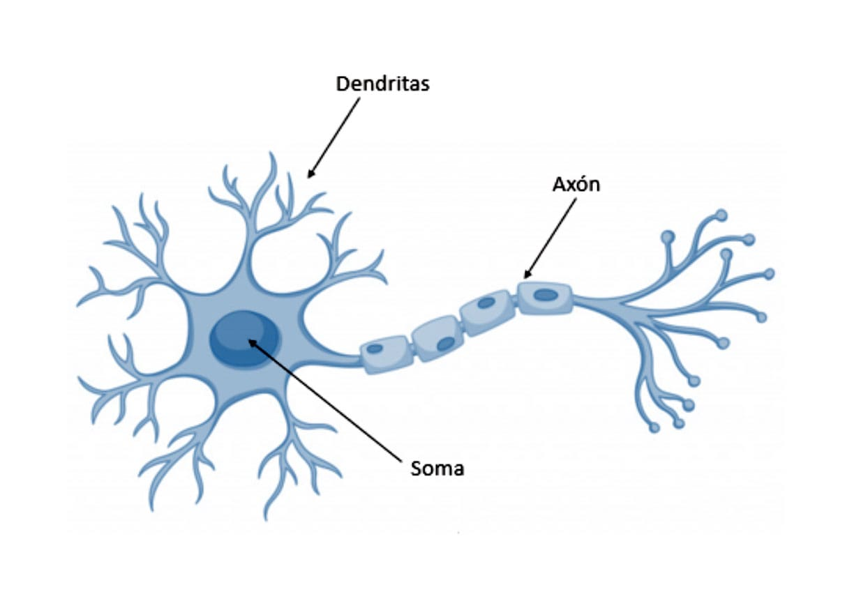partes de una red neuronal
